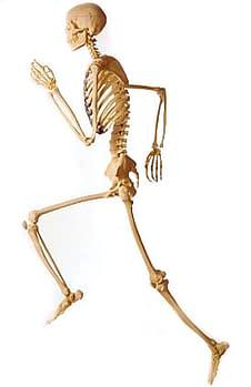strong healthy bones running